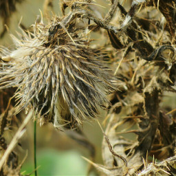 photography nature flower dried