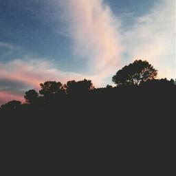 freetoedit sunstet pinksky trees contrast