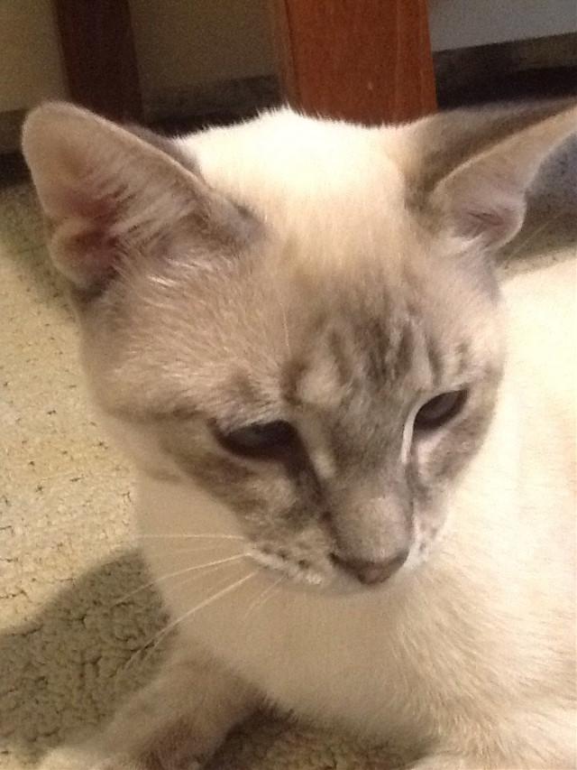 #FreeToEdit  Love my kitten. #kitten
