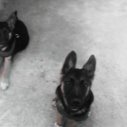 freetoedit dogs madewithpicsart