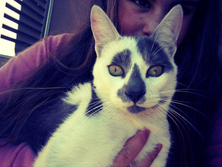 #gato #de #el #vecino 😂😂😍