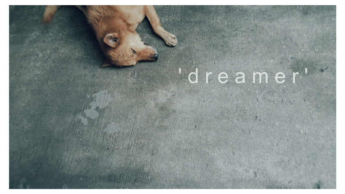 #sleep  #sleepy  #sleeping #sleepmode #dream #dreams #dog #animal #animallover #pet #pets & animals #petlovers #chilling #haveagooddream #adayinthailand