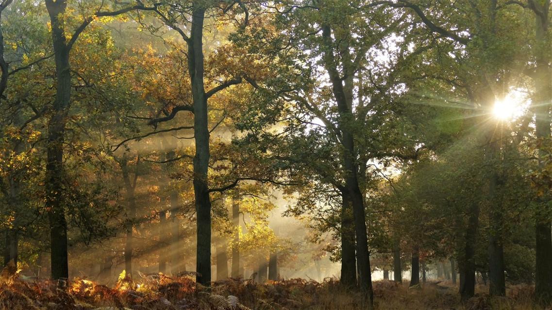 #lights #moments #autumn #nature