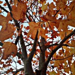 otoño tardor hojasotoñales oto hojasoto