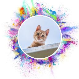FreeToEdit cat eyes colorsplash colorful stickers circle