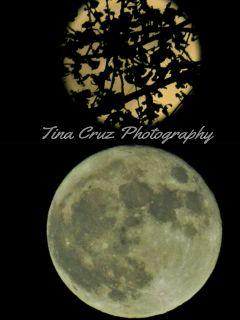 photography supermoon2016 nature moon full