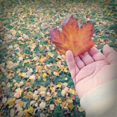 freetoedit photography nature hand leaf