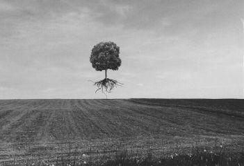 freetoedit remix remixed tree roots