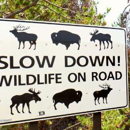 dpcwords wildlife yellowstone yellowstonenationalpark sign pcbillboard