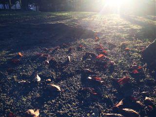freetoedit autumnvibes