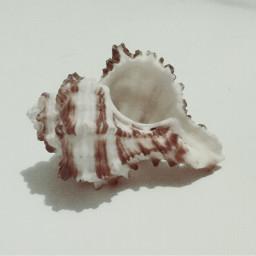 nature seashells remixme freetoedit